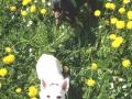 Mamita und Pat geniessen die Frühlingswiese