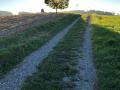Evi St Heimweg von Schottikon nach Gachnang 1