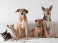 Fotoaktion Tierschutz
