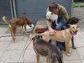 Zur Erholung schmusen im Tierheim