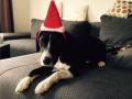 Weihnachten 2017 Toto
