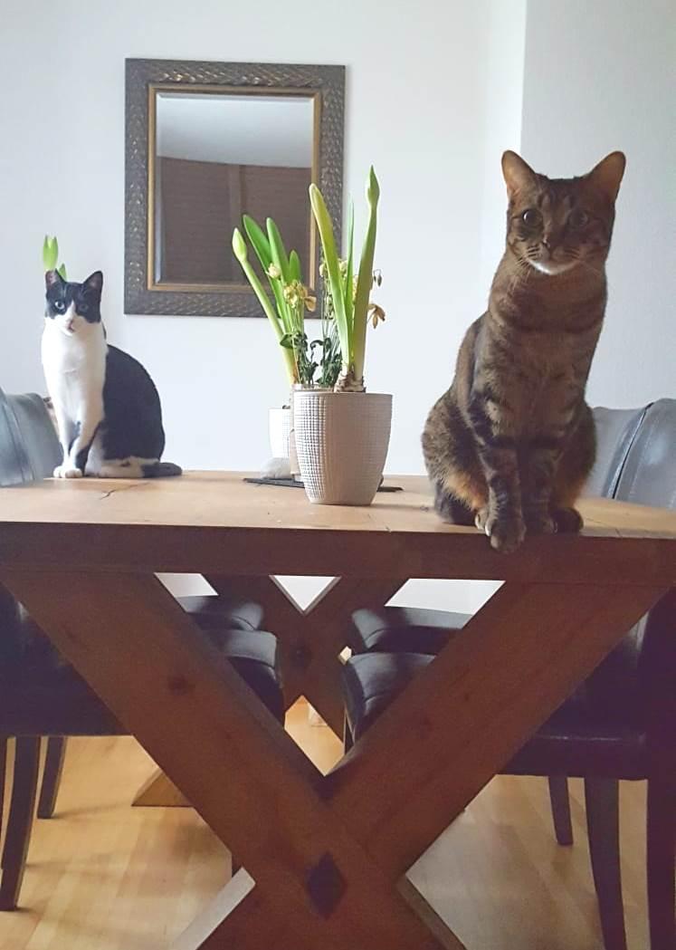 Mini und Coco