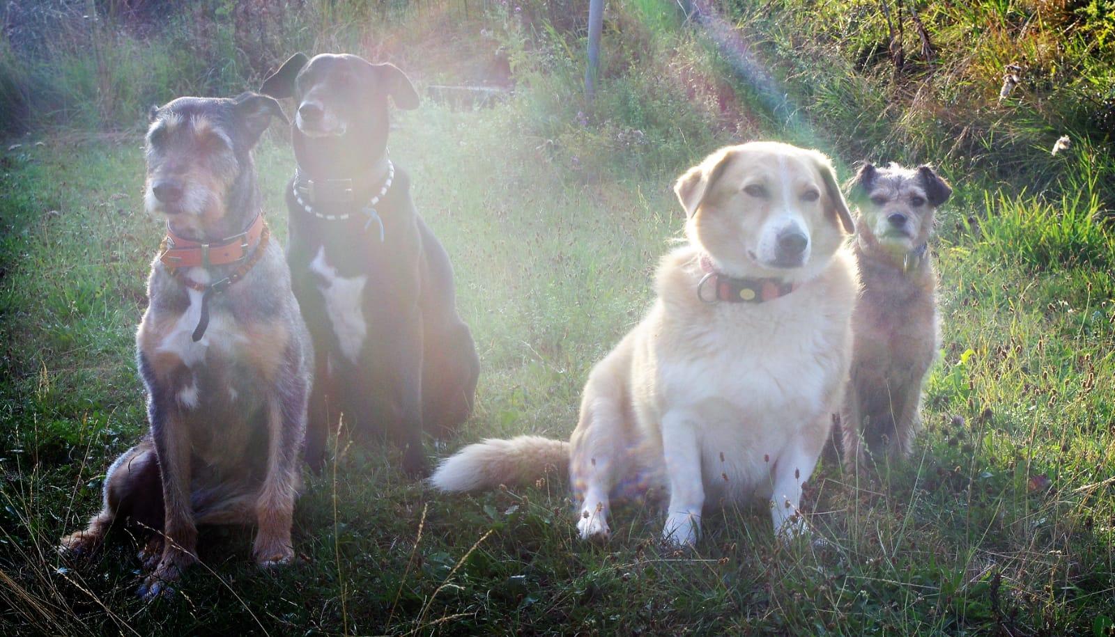 Moro und Sunny mit Freunden
