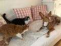 Bonnie, Lybia und Jacinto