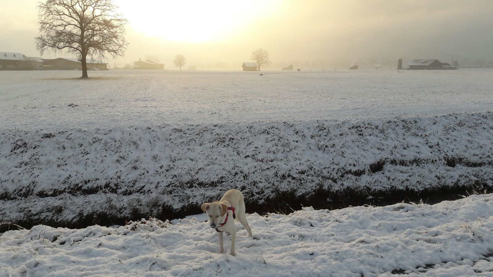 SnowyJuma Dez